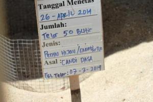 Bak pasir tempat penetasan telor penyu
