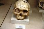 Homo sapiens wajakensis