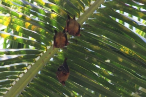 Kelelawar tidur di siang hari
