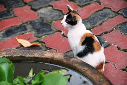 Kucing 4