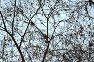 Pohon mati