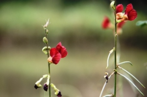 Lihatlah tanaman ini. Jika kita meletakkan fokus pada bunganya,  maka bunga itu akan terlihat jelas, terang dan detail, sedangkan element lain di sekitarnya tampak blur, buram dan tidak jelas.