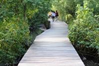 Jalan di Hutan mangrove
