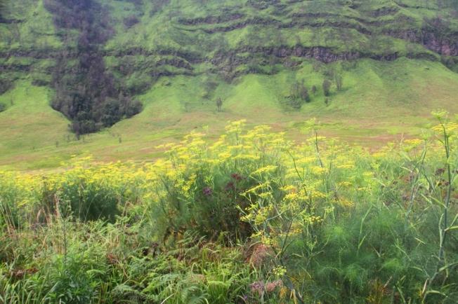 Savana Gunung Bromo 4