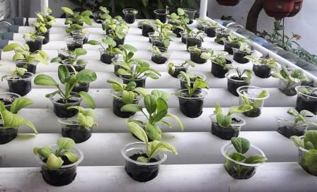 Urban Farming Belajar Bertanam Hidroponik Nimadesriandani
