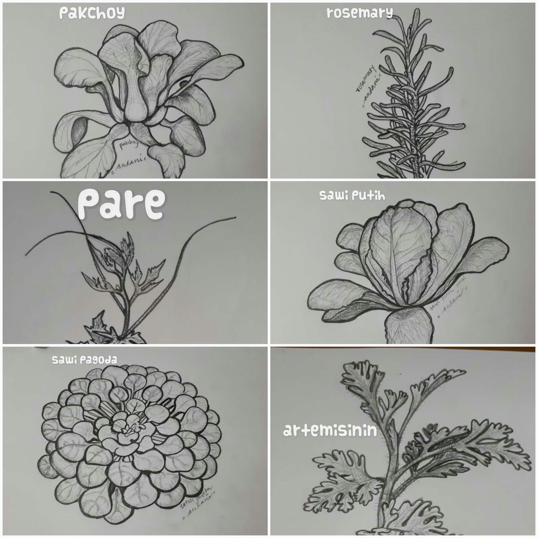 Garden Art – Koleksi Kebun Dapur Hidup Saya