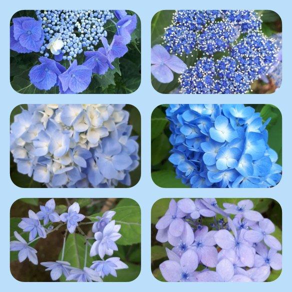 Ragam Bunga Pecah Seribu Di Negeri Sakura Nimadesriandani